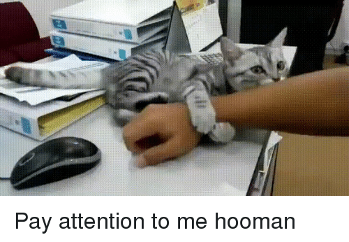 Pay Attention, Attention, and  Pay Attention to Me: Pay attention to me hooman