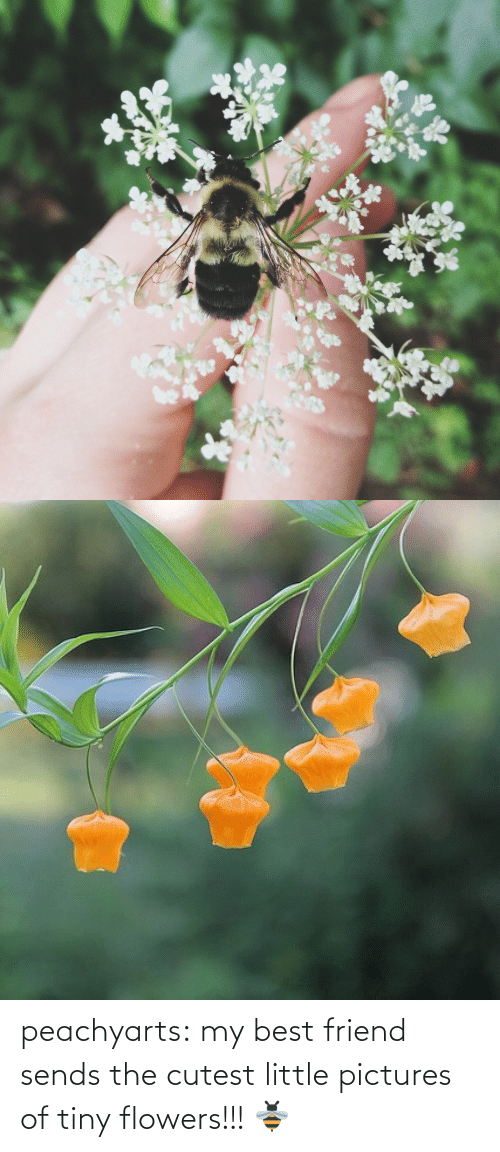 best friend: peachyarts:  my best friend sends the cutest little pictures of tiny flowers!!! 🐝