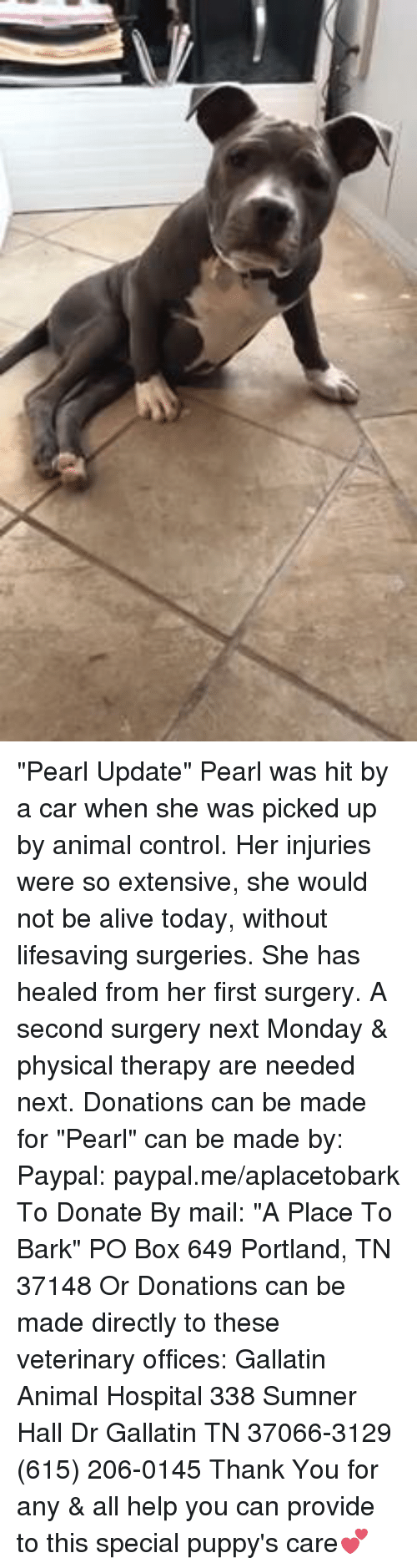 "Providence: ""Pearl Update"" Pearl was hit by a car when she was picked up by animal control.  Her injuries were so extensive, she would not be alive today, without lifesaving surgeries. She has healed from her first surgery.   A second surgery next Monday & physical therapy are needed next. Donations can be made for ""Pearl"" can be made by: Paypal: paypal.me/aplacetobark To Donate By mail:  ""A Place To Bark"" PO Box 649 Portland, TN 37148 Or Donations can be made directly to these veterinary offices: Gallatin Animal Hospital 338 Sumner Hall Dr Gallatin TN 37066-3129 (615) 206-0145  Thank You for any & all help you can provide to this special puppy's care💕"