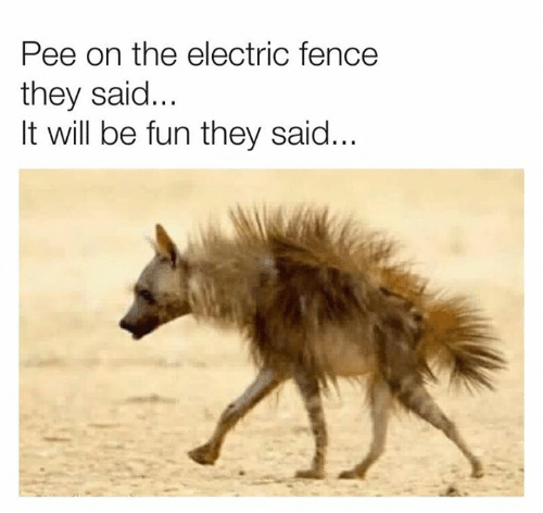 it will be fun they said: Pee on the electric fence  they said...  It will be fun they said