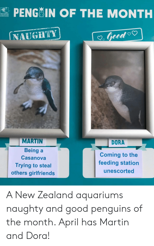 Martin, Aquarium, and Dora: PENG IN OF THE MONTH  NATIONA  AQUARIUM  NAUGHTY  MARTIN  Being a  Casanova  Trying to steal  others girlfriends  DORA  Coming to the  feeding station  unescorted A New Zealand aquariums naughty and good penguins of the month. April has Martin and Dora!