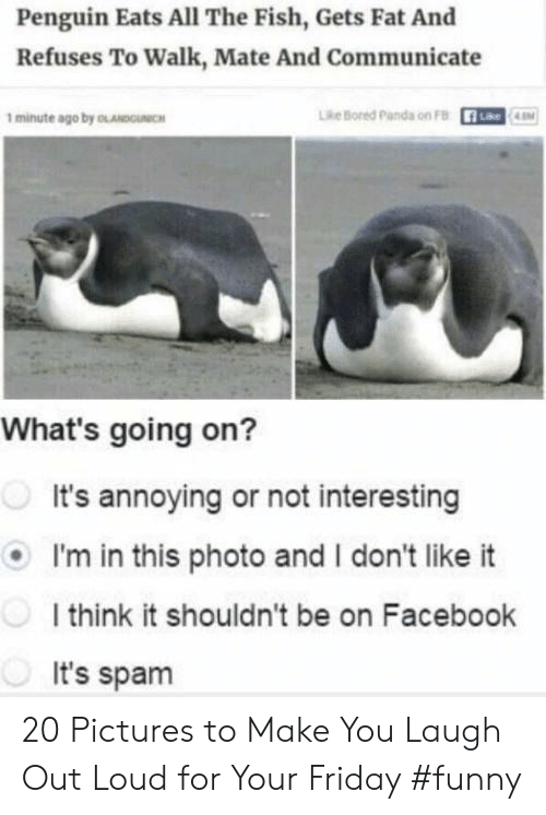 i dont like it: Penguin Eats All The Fish, Gets Fat And  Refuses To Walk, Mate And Communicate  1 minute ago by OLANDOICH  Lhe Bored parda on FB  What's going on?  It's annoying or not interesting  I'm in this photo and I don't like it  I think it shouldn't be on Facebook  It's spam 20 Pictures to Make You Laugh Out Loud for Your Friday #funny