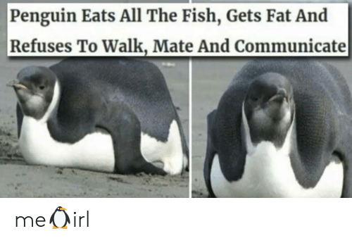 mate: Penguin Eats All The Fish, Gets Fat And  Refuses To Walk, Mate And Communicate me🐧irl