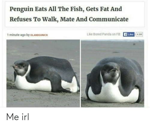 Penguin: Penguin Eats All The Fish, Gets Fat And  Refuses To Walk, Mate And Communicate  Like Bored Panda on FB: A Like  1 minute ago by OLANDGUNICH  4.6M Me irl