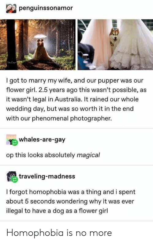Phenomenal, Australia, and Flower: penguinssonamor  got to marry my wife, and our pupper was our  flower girl. 2.5 years ago this wasn't possible, as  it wasn't legal in Australia. It rained our whole  wedding day, but was so worth it in the end  with our phenomenal photographer.  whales-are-gay  op this looks absolutely magical  traveling-madness  I forgot homophobia was a thing and i spent  about 5 seconds wondering why it was ever  illegal to have a dog as a flower girl Homophobia is no more