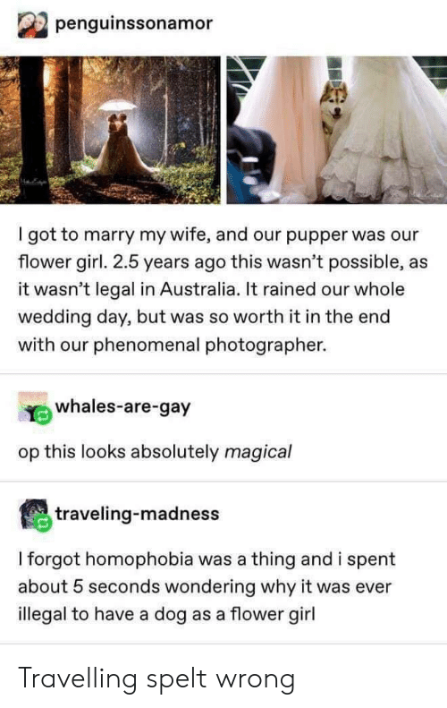 Travelling: penguinssonamor  I got to marry my wife, and our pupper was our  flower girl. 2.5 years ago this wasn't possible,  it wasn't legal in Australia. It rained our whole  wedding day, but was so worth it in the end  with our phenomenal photographer.  whales-are-gay  op this looks absolutely magical  traveling-madness  I forgot homophobia was a thing and i spent  about 5 seconds wondering why it was ever  illegal to have a dog as a flower girl Travelling spelt wrong