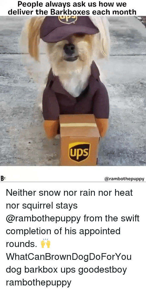 Memes, Ups, and Heat: People always ask us how we  deliver the Barkboxes each month  UDS  Bs  @rambothepuppy Neither snow nor rain nor heat nor squirrel stays @rambothepuppy from the swift completion of his appointed rounds. 🙌 WhatCanBrownDogDoForYou dog barkbox ups goodestboy rambothepuppy