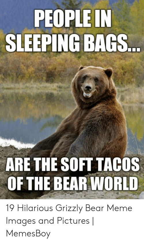 Memesboy: PEOPLE IN  SLEEPING BAGS...  ARE THE SOFT TACOS  OF THE BEAR WORLD 19 Hilarious Grizzly Bear Meme Images and Pictures | MemesBoy