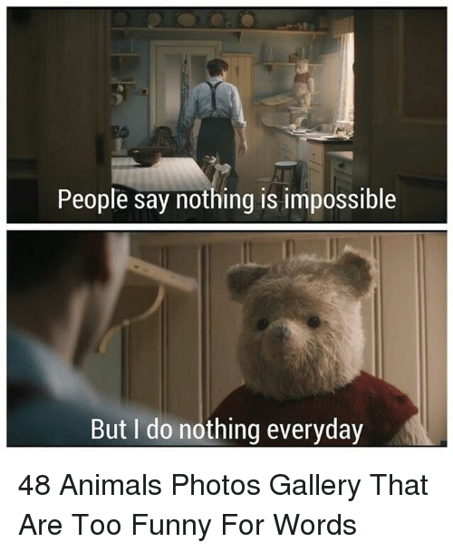 Animals, Funny, and Photos: People say nothing is impossible  But I do nothing everyday 48 Animals Photos Gallery That Are Too Funny For Words