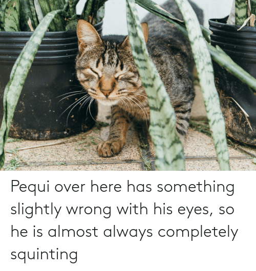 Squinting: Pequi over here has something slightly wrong with his eyes, so he is almost always completely squinting