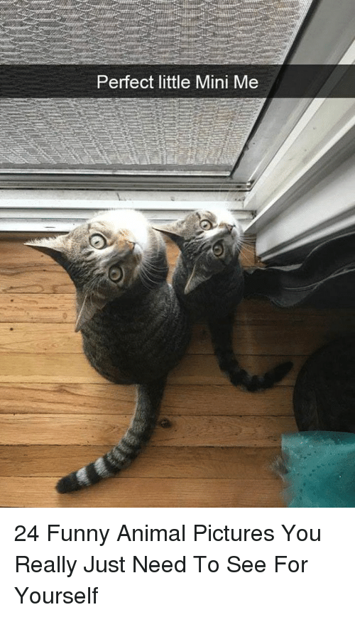 Funny, Mini-Me, and Animal: Perfect little Mini Me 24 Funny Animal Pictures You Really Just Need To See For Yourself