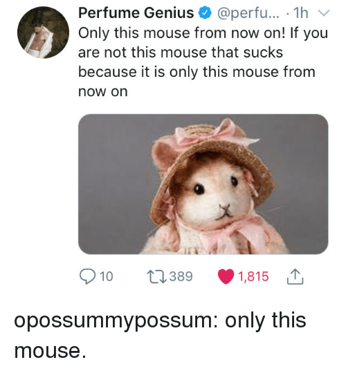 Tumblr, Blog, and Genius: Perfume Genius @perfu... 1hv  Only this mouse from now on! If you  are not this mouse that sucks  because it is only this mouse from  now on  a)  10 389 1,815 opossummypossum:  only this mouse.