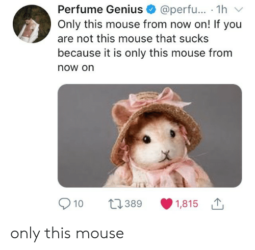 perfume: Perfume Genius @perfu... 1hv  Only this mouse from now on! If you  are not this mouse that sucks  because it is only this mouse from  now on  910 389 1,815 only this mouse