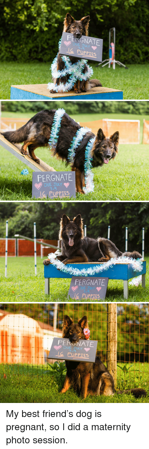 Best Friend, Pregnant, and Puppies: PERGNATE  DUE JULY  O PUPPIES   PERGNATE  DUE JULY  7-9  lg PUPPIES   PERGNATE  DUE JULY  7-9  G PUPPIES  le   PERGNATE  DUE JULY  7-9  PUPPIES My best friend's dog is pregnant, so I did a maternity photo session.