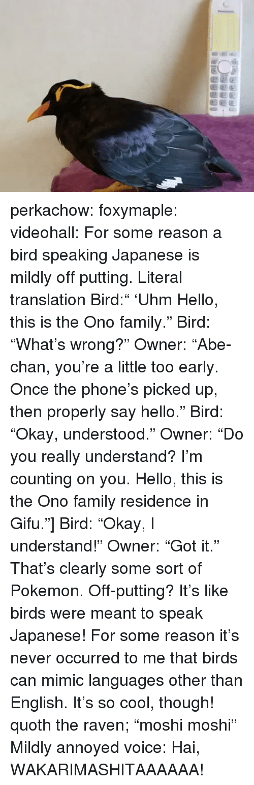 "Family, Hello, and Phone: perkachow: foxymaple:  videohall:  For some reason a bird speaking Japanese is mildly off putting.     Literal translation Bird:"" 'Uhm Hello, this is the Ono family."" Bird: ""What's wrong?"" Owner: ""Abe-chan, you're a little too early. Once the phone's picked up, then properly say hello."" Bird: ""Okay, understood."" Owner: ""Do you really understand? I'm counting on you. Hello, this is the Ono family residence in Gifu.""] Bird: ""Okay, I understand!"" Owner: ""Got it.""  That's clearly some sort of Pokemon.  Off-putting? It's like birds were meant to speak Japanese!  For some reason it's never occurred to me that birds can mimic languages other than English. It's so cool, though!     quoth the raven; ""moshi moshi""  Mildly annoyed voice: Hai, WAKARIMASHITAAAAAA!"