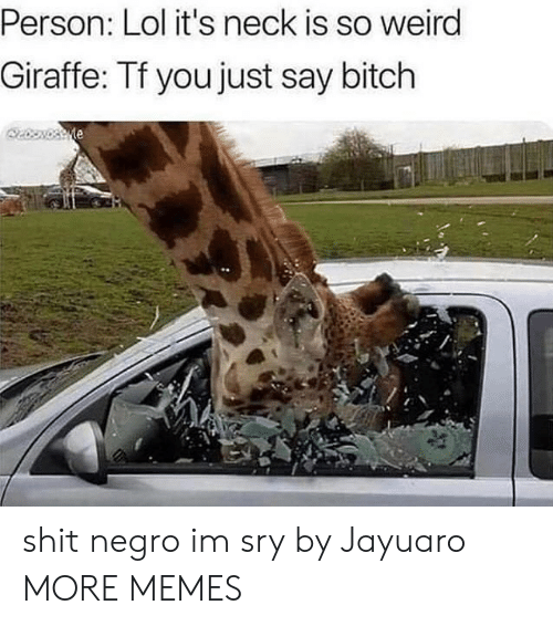 Bitch, Dank, and Lol: Person: Lol it's neck is so weird  Giraffe: Tf you just say bitch  te shit negro im sry by Jayuaro MORE MEMES