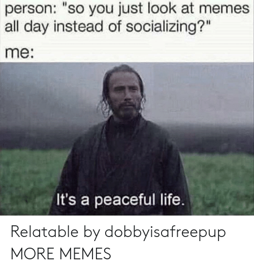 "Dank, Life, and Memes: person: ""so you just look at memes  all day instead of socializing?""  me:  It's a peaceful life Relatable by dobbyisafreepup MORE MEMES"