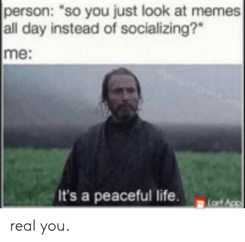 "Appl: person: ""so you just look at memes  all day instead of socializing?  me:  It's a peaceful life.  Lart Appl real you."