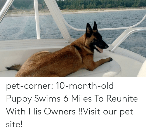 Cats, Cute, and Tumblr: pet-corner:  10-month-old Puppy Swims 6 Miles To Reunite With His Owners !!Visit our pet site!