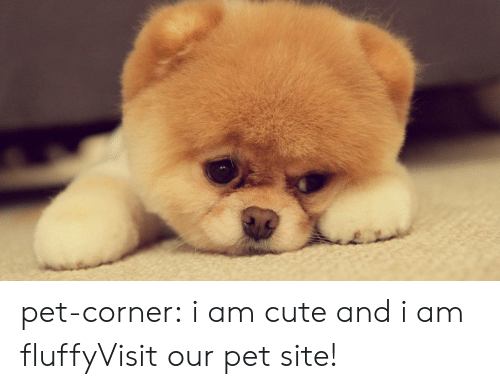 Cats, Cute, and Tumblr: pet-corner:  i am cute and i am fluffyVisit our pet site!