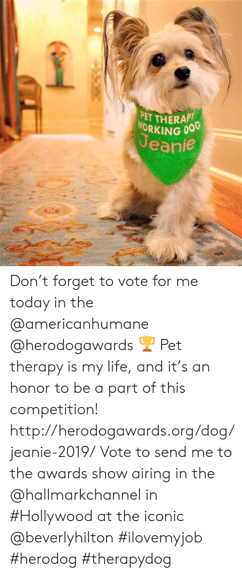 Hallmarkchannel: PET THERAP  WORKING DOG  Jeanie Don't forget to vote for me today in the @americanhumane @herodogawards 🏆 Pet therapy is my life, and it's an honor to be a part of this competition! http://herodogawards.org/dog/jeanie-2019/ Vote to send me to the awards show airing in the @hallmarkchannel in #Hollywood at the iconic @beverlyhilton  #ilovemyjob #herodog #therapydog