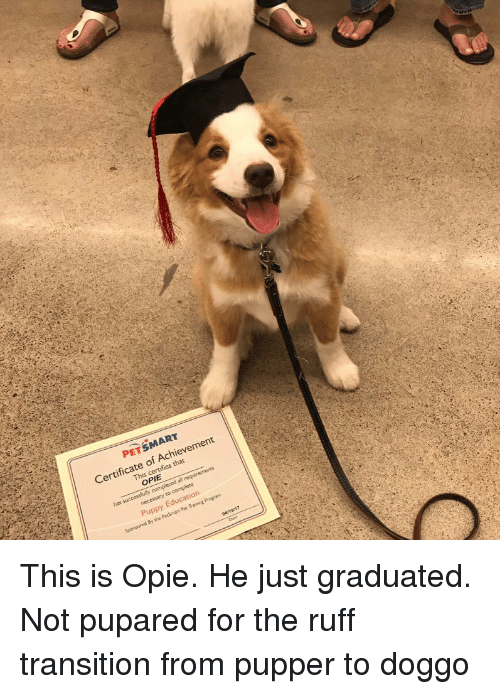 Petsmart, Puppy, and Doggo: PETSMART  Certificate of Achievement  This c  s that  OPIE  has  Puppy Education This is Opie. He just graduated. Not pupared for the ruff transition from pupper to doggo