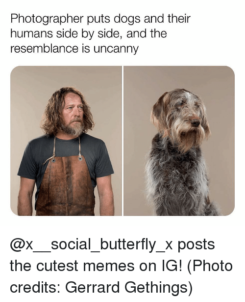 Dogs, Memes, and Butterfly: Photographer puts dogs and their  humans side by side, and the  resemblance is uncanny @x__social_butterfly_x posts the cutest memes on IG! (Photo credits: Gerrard Gethings)
