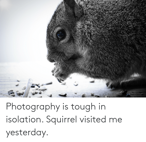 Visited: Photography is tough in isolation. Squirrel visited me yesterday.