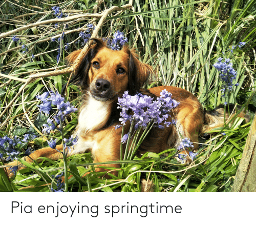 Pia, Enjoying, and Springtime: Pia enjoying springtime