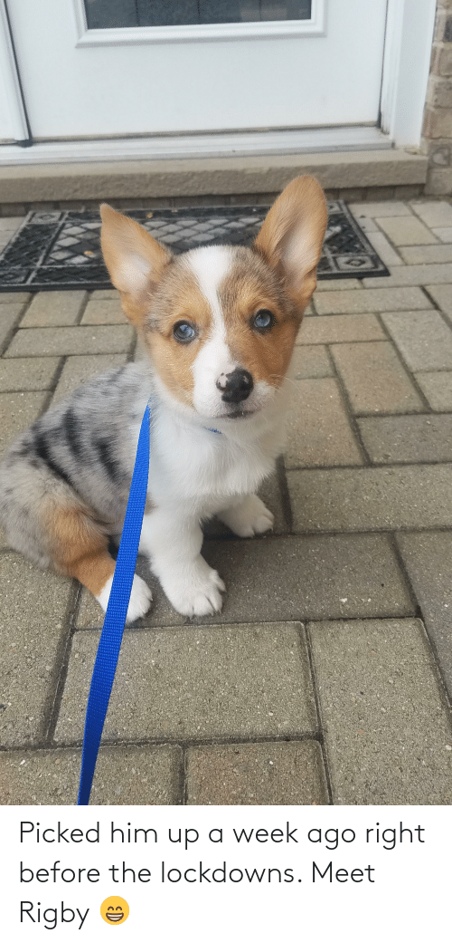rigby: Picked him up a week ago right before the lockdowns. Meet Rigby 😁