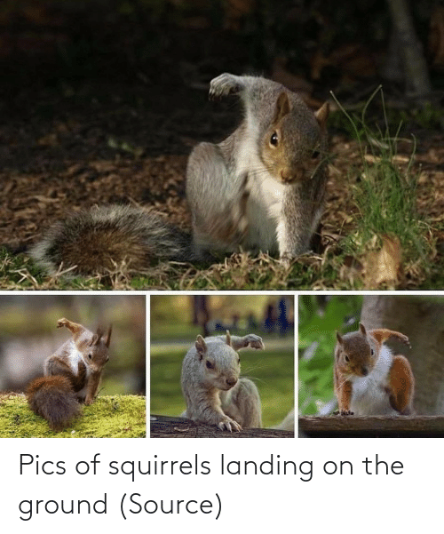 www: Pics of squirrels landing on the ground (Source)