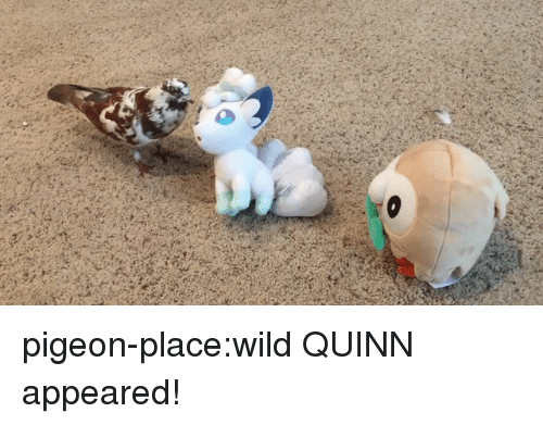 Target, Tumblr, and Blog: pigeon-place:wild QUINN appeared!