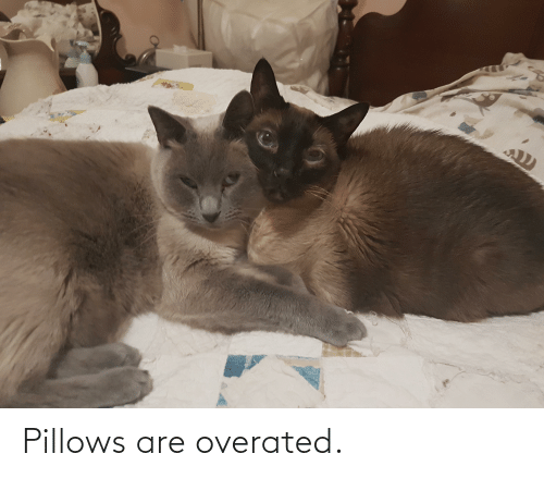 pillows: Pillows are overated.