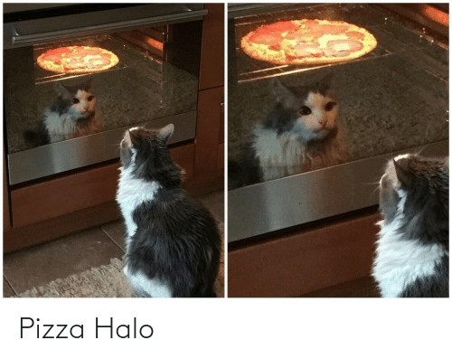 pizza: Pizza Halo
