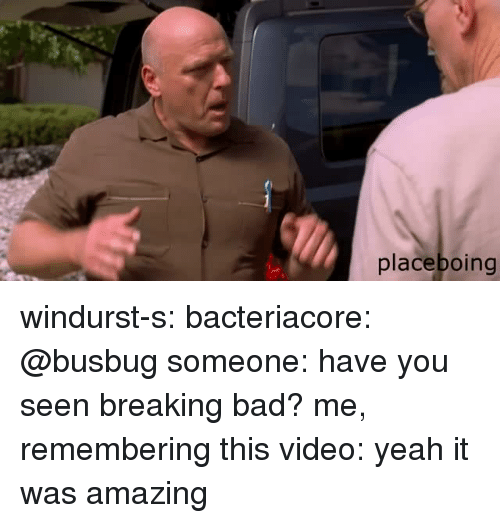 Breaking Bad: placeboing windurst-s:  bacteriacore:  @busbug   someone: have you seen breaking bad? me, remembering this video: yeah it was amazing