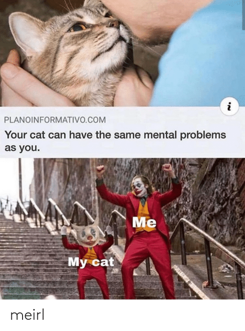 you me: PLANOINFORMATIVO.COM  Your cat can have the same mental problems  as you.  Me  My cat meirl