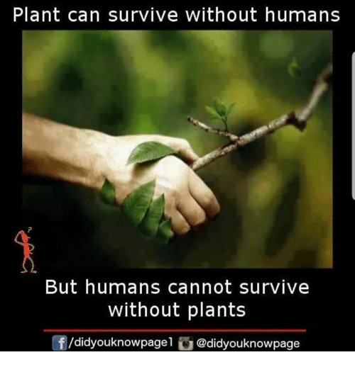 Memes, 🤖, and Can: Plant can survive without humans  But humans cannot survive  without plants  f/didyouknowpagel @didyouknowpage