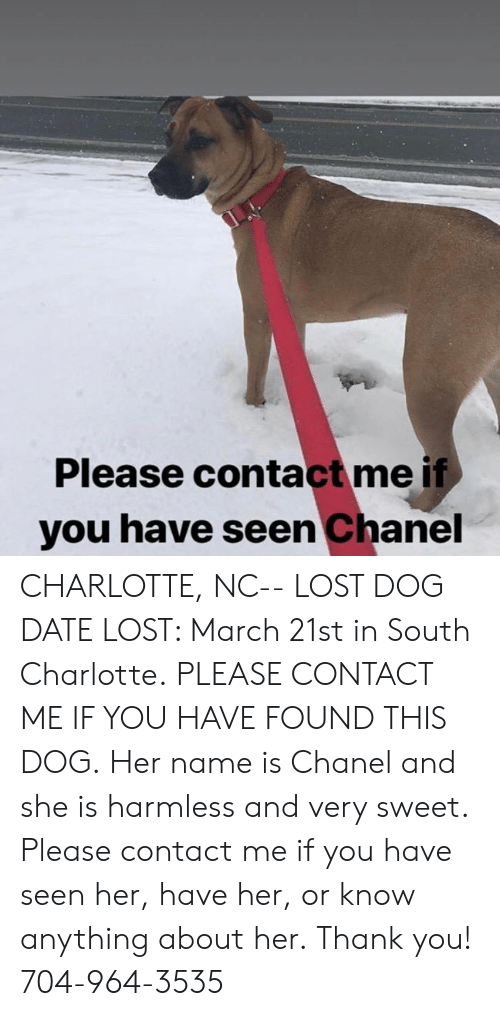 Memes, Lost, and Thank You: Please contact me if  you have seen Chanel CHARLOTTE, NC-- LOST DOG  DATE LOST: March 21st in South Charlotte. PLEASE CONTACT ME IF YOU HAVE FOUND THIS DOG. Her name is Chanel and she is harmless and very sweet. Please contact me if you have seen her, have her, or know anything about her. Thank you! 704-964-3535