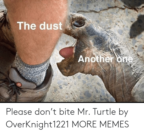 Turtle: Please don't bite Mr. Turtle by OverKnight1221 MORE MEMES