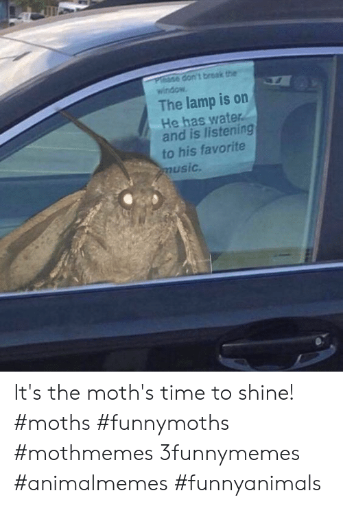 Favorite Music: Please don't break the  window  The lamp is on  He has water.  and is listening  to his favorite  music. It's the moth's time to shine!  #moths #funnymoths #mothmemes 3funnymemes #animalmemes #funnyanimals