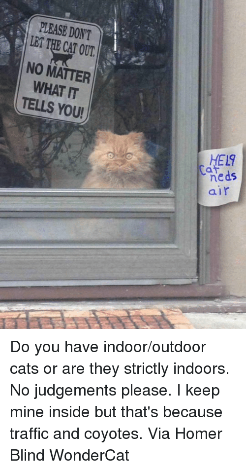 Homerism: PLEASE DONT  LET THE CAT OUT  NO MATTER  WHAT IT  TELLS YOU!  HEL9  neds  air  5 Do you have indoor/outdoor cats or are they strictly indoors. No judgements please. I keep mine inside but that's because traffic and coyotes. Via Homer Blind WonderCat