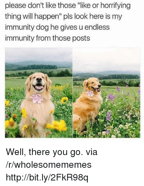 "immunity: please don't like thoe ""like or horrifying  thing will happen"" pls look here is my  immunity dog he gives u endless  immunity from those posts Well, there you go. via /r/wholesomememes http://bit.ly/2FkR98q"