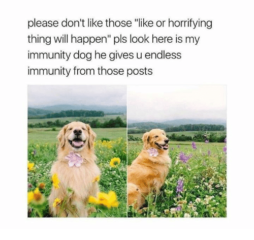"""Dog, Looking, and Will: please don't like those """"like or horrifying  thing will happen"""" pls look here is my  immunity dog he gives u endless  immunity from those posts"""