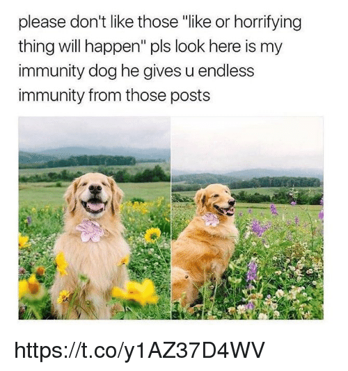 """Memes, 🤖, and Dog: please don't like those """"like or horrifying  thing will happen"""" pls look here is my  immunity dog he gives u endless  immunity from those posts https://t.co/y1AZ37D4WV"""