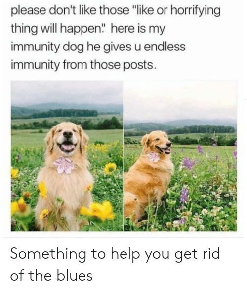 "immunity: please don't like those ""like or horrifying  thing will happen"" here is my  immunity dog he gives u endless  immunity from those posts. Something to help you get rid of the blues"