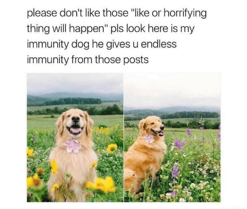 "immunity: please don't like those ""like or horrifying  thing will happen"" pls look here is my  immunity dog he gives u endless  immunity from those posts"