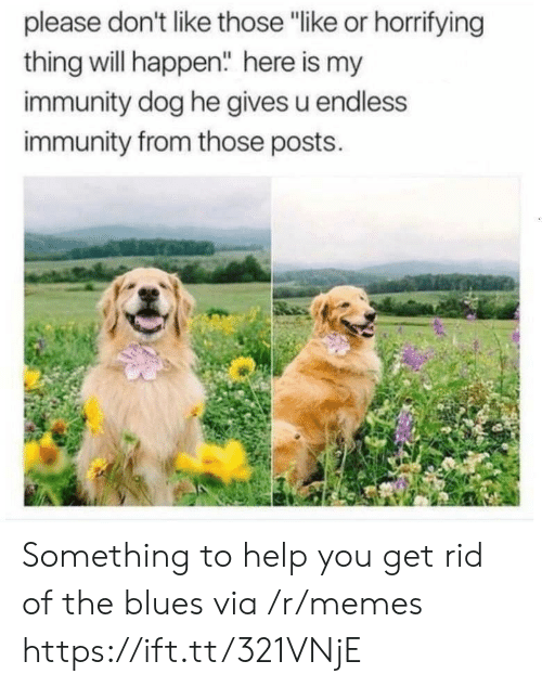 "immunity: please don't like those ""like or horrifying  thing will happen"" here is my  immunity dog he gives u endless  immunity from those posts. Something to help you get rid of the blues via /r/memes https://ift.tt/321VNjE"