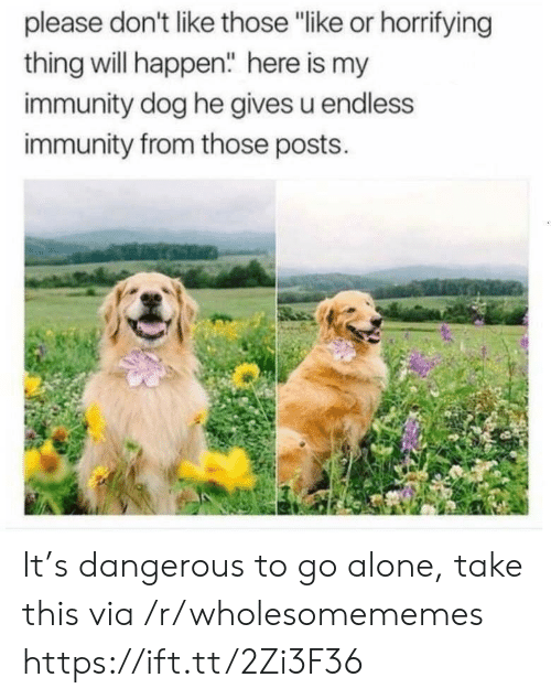"Being Alone, Dog, and Via: please don't like those ""like or horrifying  thing will happen"" here is my  immunity dog he gives u endless  immunity from those posts. It's dangerous to go alone, take this via /r/wholesomememes https://ift.tt/2Zi3F36"
