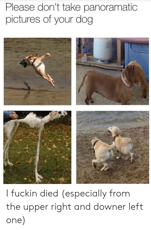 Pictures, Dog, and One: Please don't take panoramatic  pictures of your dog I fuckin died (especially from the upper right and downer left one)