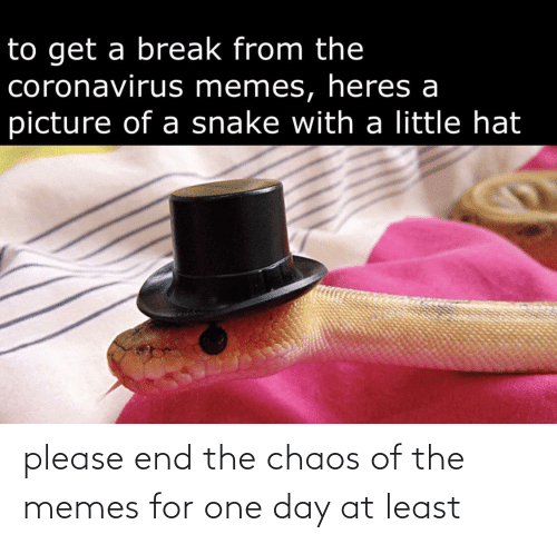one day: please end the chaos of the memes for one day at least